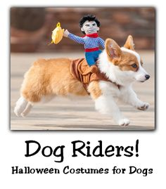 Easy Halloween Costumes for Dogs – Dog Riders!