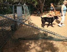 Lakeway dog park closed after being vandalized - http://austin.citylocalbuzz.com/lakeway-dog-park-closed-after-being-vandalized/