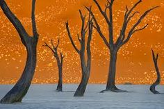 Camel Thorn Trees, Namibia Photograph by Frans Lanting, National Geographic (via Namib-Naukluft Park Picture – Travel Wallpaper – National Geographic Photo of the Day) Frans Lanting, Park Pictures, Montage Photo, Travel Wallpaper, Wtf Fun Facts, Random Facts, To Infinity And Beyond, No Photoshop, National Geographic Photos