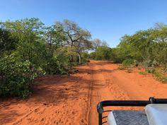 Itinéraire de notre Road-trip Afrique du Sud – Mozambique Safari, Road Trip, Station Balnéaire, Africa, Country Roads, Travel, South Africa, Archipelago, Dance Floors