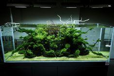 Pretty cool aquarium flora