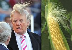 Donald Trump and his many lookalikes (18 pictures)