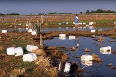 """Productores pampeanos debatieron por el """"excesivo uso de agroquímicos"""""""