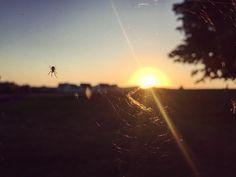 Sunrise Nature Photography, Sunrise, Celestial, Flowers, Plants, Outdoor, Outdoors, Sunrises, Flora