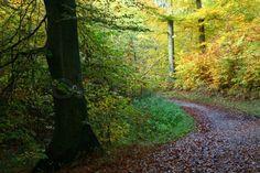 danmark efterar | Stock foto af 'efteråret på landet i Danmark'