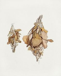 moth cocoons by  tiffany mcnab