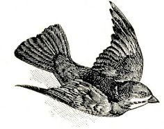 Free Vintage Clip Art - Dictionary Bird Images - The Graphics Fairy