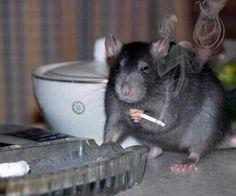 Ratatouille? I havent heard that name in years. http://ibeebz.com