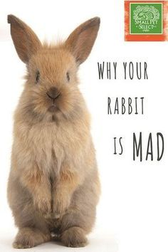 10 Things You Do that Your Bunny Can't Stand