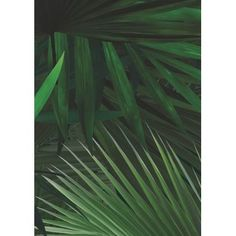 Our designs are printed on the best non-woven wallpaper there is. This type of wallpaper is easy to apply: bring your glue with a roller directly onto your wall Amsterdam, Botanical Wallpaper, Of Wallpaper, Palm Trees, Plant Leaves, Sweet Home, Tropical, Plants, Design