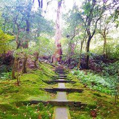 Carpet of moss(^ ^) ****************** #natadera #那谷寺 #moss #mossgreen #苔