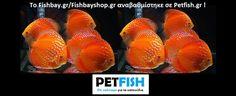 ΑΡΧΙΚΗ/HOME - FISH BAY