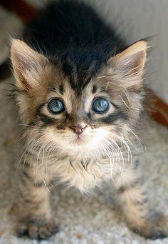 goodmorningkitten.com/kitten/382/