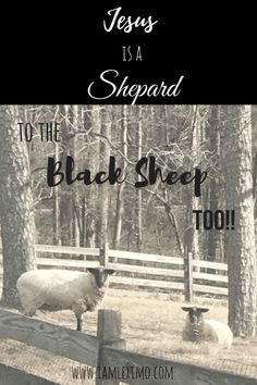 Jesus is a Shepard to the Black Sheep Too