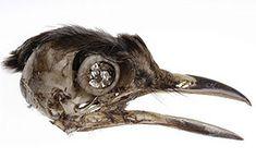 Julia deVille, - Brooch: Bird Skull, 2004 Bird Skull, cubic zirconia, sterling silver 5 x 2.5 x 3 cm