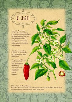 Chili  http://www.kraeuter-verzeichnis.de/