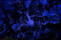 rainforest night sky - Google Search
