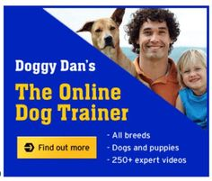 Dog Training Classes: Doggy Dan's Training  Doggy Dan – World Expert Dog Trainer  Have a look at his great online dog training classes. He shows in great detail training through a list of 250 videos how to stop all unwanted dog behaviour in simple, effective and gentle steps. Over 10,000 other dog owners have used Dan's system to gain exclusive access to his training techniques.  What are you waiting for? Go and check it out by clicking here…