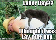Why would a cat care- they never have to labor anyway!