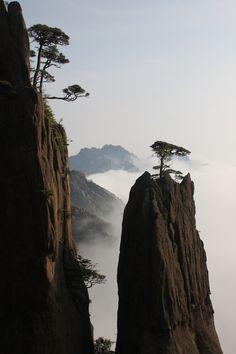 Pine tree growing on a rock, Huang Shan.