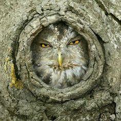 Mi casa NO es su casa..!!  From : @owls.hoot.daily - . .  For amazing owl photos and videos follow @owl.gifts #owl #owls #owllove