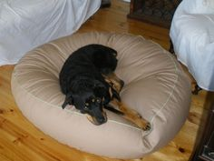 Belle, a Rottie from Thurgoona in NSW Large Dogs, Rottweiler, Dog Bed, Pets, Pictures, Animals, Animais, Big Dogs, Animales