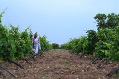 Walking the vineyard, after light rain and the grapes 🍇 are shining in Sicily.    #ilivewine #redwine #whitewine #nerodavola #winelovers #grapewine #winetime #sunset #sicilianwine 🍷❤️#experiencesicily #siciliafoto #sizilien #instasicilia  #sicilian_world #foodandwine #winelife #winetasting #wineaddict #winedinner #wineglass #wineissharing🍷#wineglass #vino.