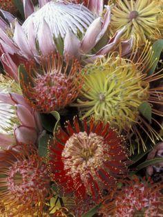 Hawaii Usa, Maui Hawaii, Tropical Landscaping, Landscaping With Rocks, Landscaping Tips, Protea Flower, Landscape Design Plans, Exotic Flowers, Rare Flowers