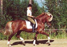 Finnhorse flaxen chestnut Horse Breeds, Donkeys, Horse Stuff, Zebras, Beautiful Horses, Finland, Animals And Pets, Equestrian, Scandinavian