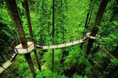 Tree top suspension bridges in Vancouver, BC Canada..Visitors move from tree to tree at a height of 30 meters.