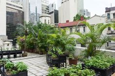 Hong Kong's rooftop farmers grow vegetables... and communities | Hong ...