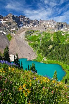 Wildflowers above Blue Lake, Sneffels Range of San Juan Mountains, Colorado