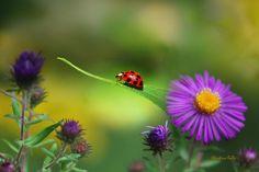 Colorful Photograph - Single In Search by Christina Rollo