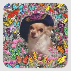 Chi Chi in Butterflies  - Chihuahua Puppy in Hat Square Sticker   teacup chihuahua for sale, chihuahua pomeranian, chihuahua pug mix #chihuahuasinbed #chihuahuah #chihuahuapelolongo Black Chihuahua, Chihuahua Puppies, Pug, German Shepherd Chihuahua Mix, Chihuahua Clothes, Puppy Sitting, Red Butterfly, Cute Hats, Chi Chi