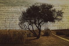 The tree of poetry by Vittorio Chiampan