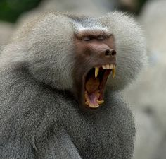 13 ANIMAL MOMENTS that will make you YAWN – TRAVEL PHOTOS
