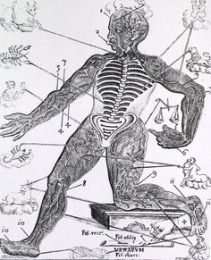The Zodiac as It Relates to the Body - Alita Prince - The Zodiac as It Relates to the Body Medical astrology associates various parts of the body and diseases with the twelve astrological signs of the zodiac. Medical Astrology, Astrology Signs, Zodiac Signs, Times New Roman, Endocrine System, Circulatory System, Capricorn, Aquarius, Medieval