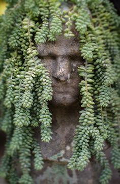 Natural Dreadlocks. Xk #kellywearstler #myvibemylife #succulents