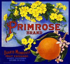 Fort Pierce Florida Action Football Orange Citrus Fruit Crate Label Art Print