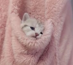Cute Cats And Kittens, I Love Cats, Crazy Cats, Kittens Cutest, Fluffy Kittens, Kittens Playing, Cute Funny Animals, Cute Baby Animals, Animals And Pets