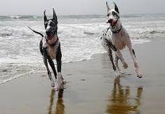 Run dog!!!!!!!!!!!!!