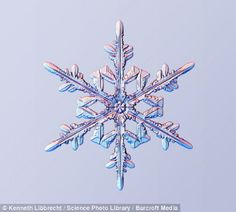 Snowflakes--Physics professor Kenneth from California Institute of Technology has been studying snowflakes since 1997. Using a special device, he shows us what they look like in reality.