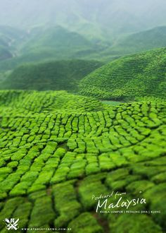 Postcard from Malaysia – Cameron Highlands   A Table For Two