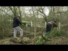 Independent youth volunteers build a dead hedge out of felled willow trees at Swanwick reserve, with Phil Summerscale