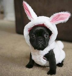 Cute Black Pug Puppy Happy Easter!