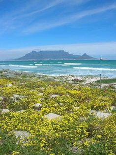 Spring cape town SA