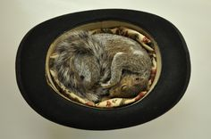 another darling taxidermy. squirrel by Jazmine Miles-Long
