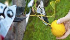 Garden Art, Garden Tools, Home And Garden, Trees To Plant, Seeds, Flowers, Plants, Tips, Outdoor