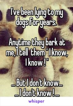 """I've been lying to my dogs for years.   Anytime they bark at me, I tell  them """" I know, I know ! """"  ... But I don't know... ... I don't know ! ..."""
