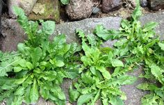 This Homemade Weed And Grass Killer Works Better Than The Store Brought Products - Mental Scoop Garden Beds, Garden Plants, Common Garden Weeds, Kill Weeds Naturally, Organic Mulch, Organic Gardening, Farmers Almanac, Weed Seeds, Weed